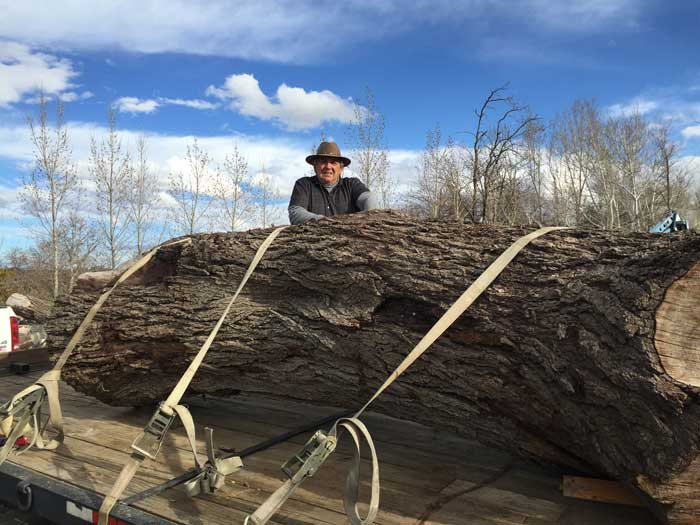 Peter-Benedict-on-trailer-behind-huge-log-on-the-way-to-the-sawmill