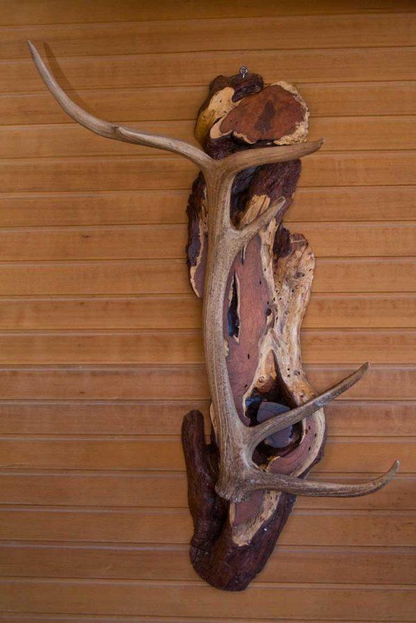 Elk Shed Mounted on Arizona Mesquite Coat-Hat Rack