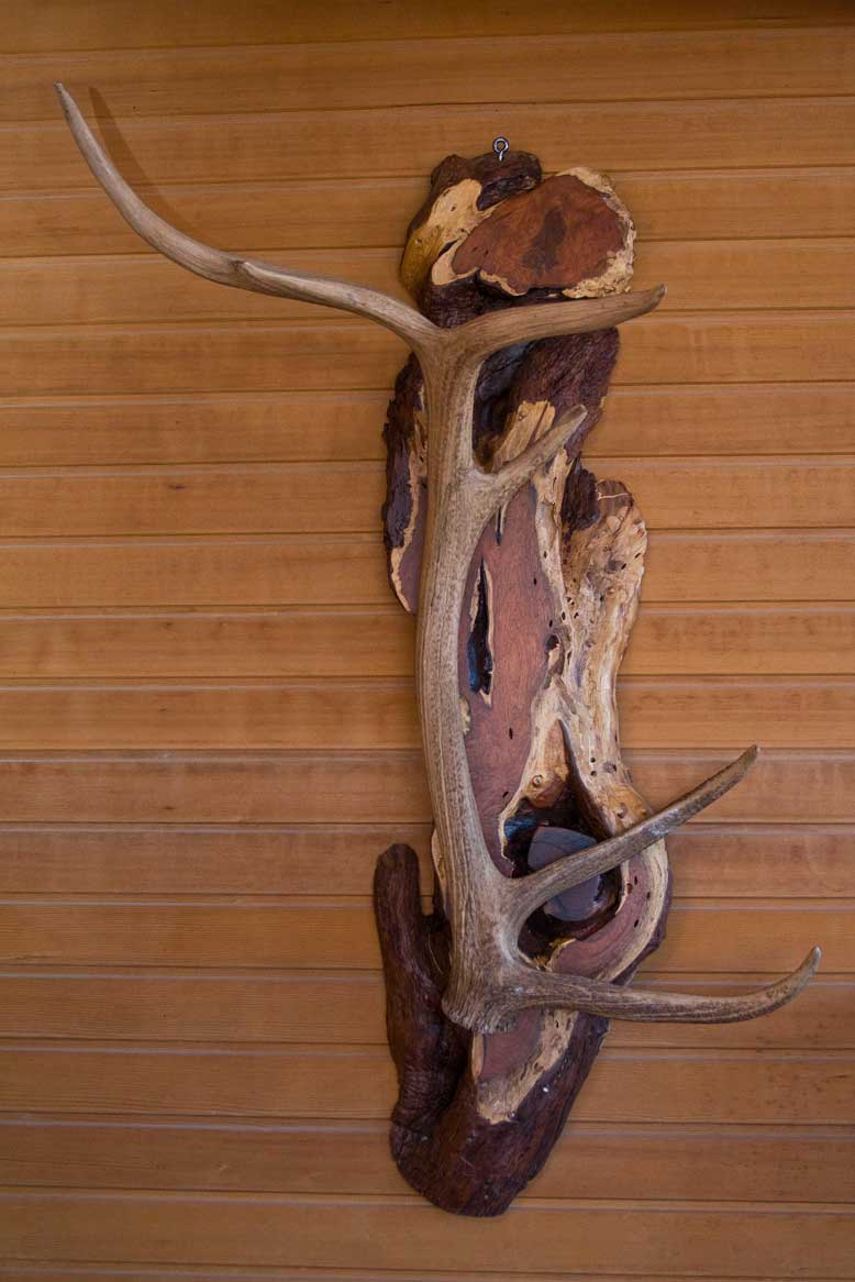 Elk Shed Mounted on Arizona Mesquite Coat-Hat Rack
