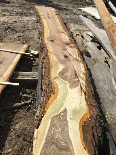 A Black Walnut slab with Green-ripples
